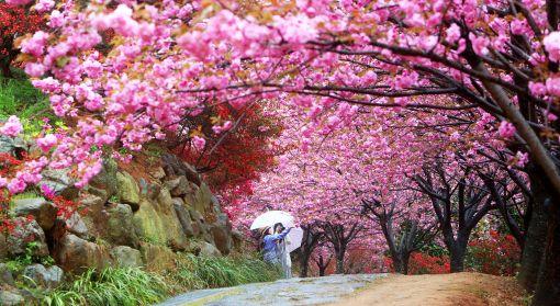 전주 완산꽃동산